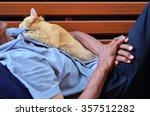 Cat Sleeping In Embrace