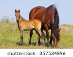 Mare And Foal On A Pasture...