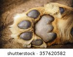 paw of lion showing pads | Shutterstock . vector #357620582
