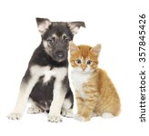 Stock photo puppy and kitten together on a white background 357845426