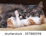 Stock photo mum cat and kitten mother cat hugging a small kitten the cat is gray fluffy the kitten is small 357880598