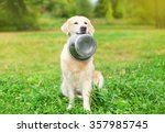 Stock photo beautiful golden retriever dog holding in teeth a bowl on grass 357985745
