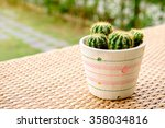 Cactus On The Mat