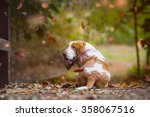 Basset Hound In Autumn