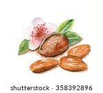 hand drawn watercolor painting... | Shutterstock . vector #358392896
