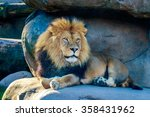Mighty Male Lion Resting On A...