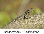 tenerife lizard | Shutterstock . vector #358461965