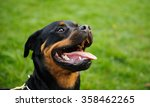 head shot of rottweiler with... | Shutterstock . vector #358462265