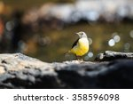 Beautiful Yellow Bird  Grey...