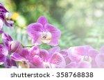 purple orchids in the garden... | Shutterstock . vector #358768838