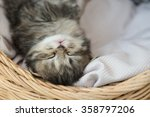 Stock photo cute tabby kitten sleeping in a basket 358797206