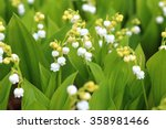 lily of the valley | Shutterstock . vector #358981466