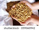 green coffee beans in hand. | Shutterstock . vector #359060942