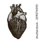 human anatomical heart | Shutterstock .eps vector #359074595