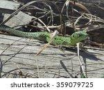 lizard basking in the sun after ... | Shutterstock . vector #359079725
