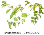 Set Apple Tree Branch With...