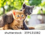 Stock photo two adorable kittens playing together kittens outdoor 359131082