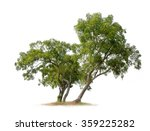 isolated trees on white... | Shutterstock . vector #359225282
