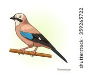 eurasian jay bird learn birds... | Shutterstock .eps vector #359265722