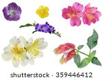 set of colorful tropical flower ... | Shutterstock . vector #359446412