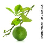 lime with leaf on white...   Shutterstock . vector #359535365