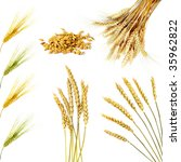 Set Of  Golden Wheat Ears ...