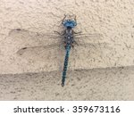 Blue Eyed Darner  Aeshna...
