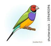 gouldian finch bird learn birds ... | Shutterstock .eps vector #359690396