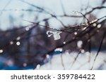 Frosty Tree Branch In Winter