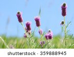 Wildflowers Of Colorado  ...