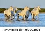 herd of white camargue horses... | Shutterstock . vector #359902895