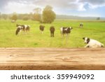 Blurred Background Of Cows On...