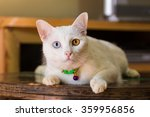 Thai White Cat With Two Color...