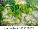 Fresh Green Seaweed And White...