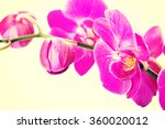 branch of orchid flower | Shutterstock . vector #360020012