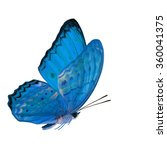 Small photo of Grace of flying pale blue butterfly, the Common Yeoman butterfly in fancy color profile side wings flying with fully wings up isolated on white background