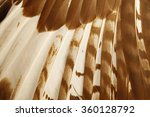eagle feathers  | Shutterstock . vector #360128792
