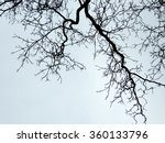 Tree Branches Against The Sky....