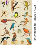 Birds. Hand Painted Placard....