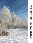 the birches covered with... | Shutterstock . vector #360308162