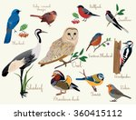 Stock vector colorful realistic birds illustration set isolated 360415112