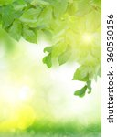 spring green leaves in garden ... | Shutterstock . vector #360530156