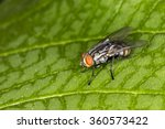 fly red eyes extreme closeup... | Shutterstock . vector #360573422
