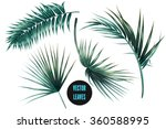 Stock vector vector tropical palm leaves jungle leaves set isolated on white background 360588995