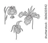 zentangle the baikal lily  iris ...   Shutterstock .eps vector #360633542