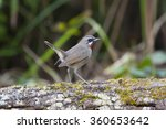 siberian rubythroat bird of... | Shutterstock . vector #360653642