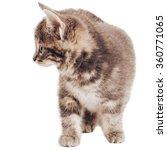 kitten isolated on white | Shutterstock . vector #360771065