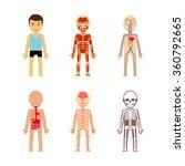 body anatomy vector... | Shutterstock .eps vector #360792665