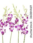 set from branch orchid and buds | Shutterstock . vector #36084469