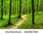 forest   Shutterstock . vector #36086788